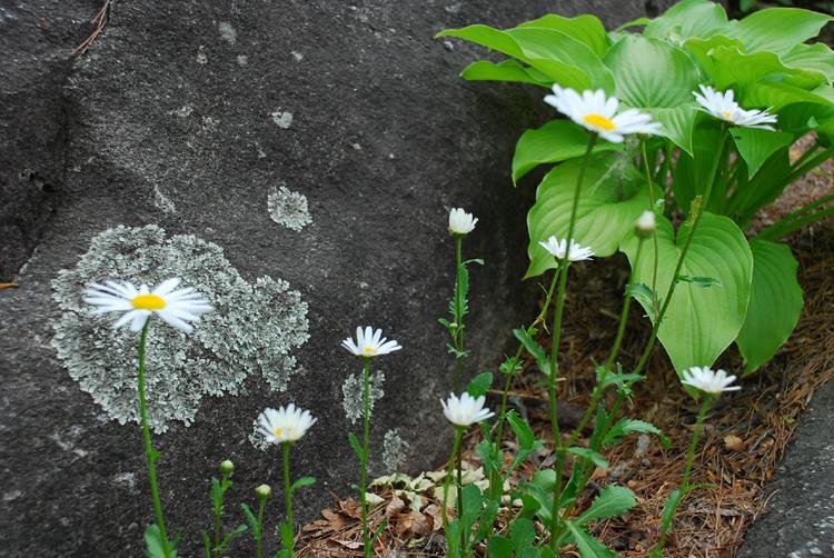 syasta20120511hamyang_2.jpg