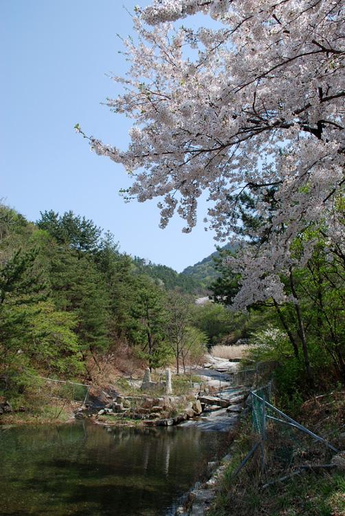 buskkoch20080411cheonju.jpg