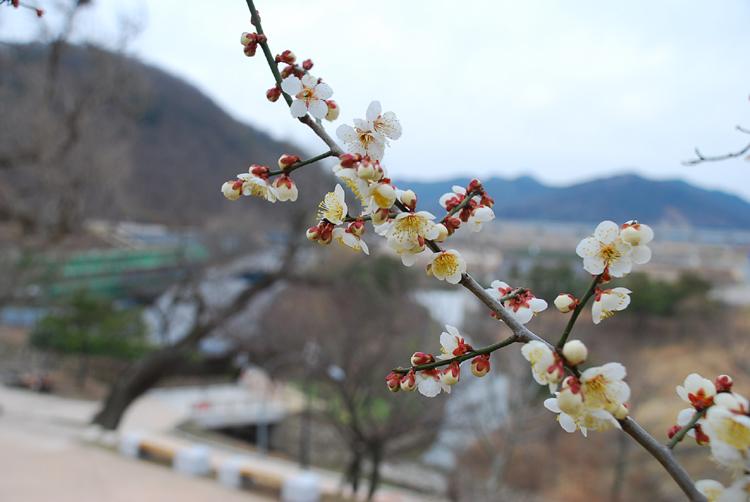 maiwhoa20140304yangdong_3.jpg