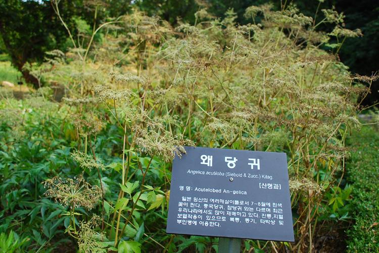 woidang20130811oknyeo_2.jpg