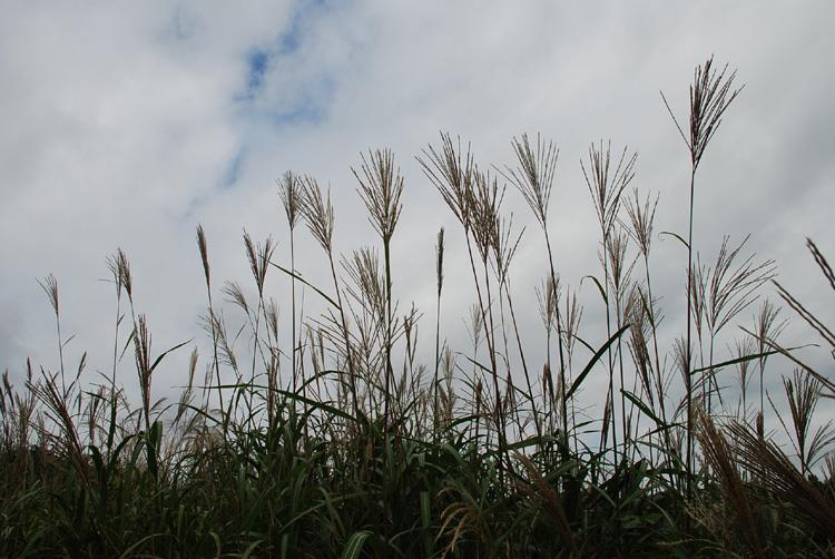 eoksai20071001unto.jpg