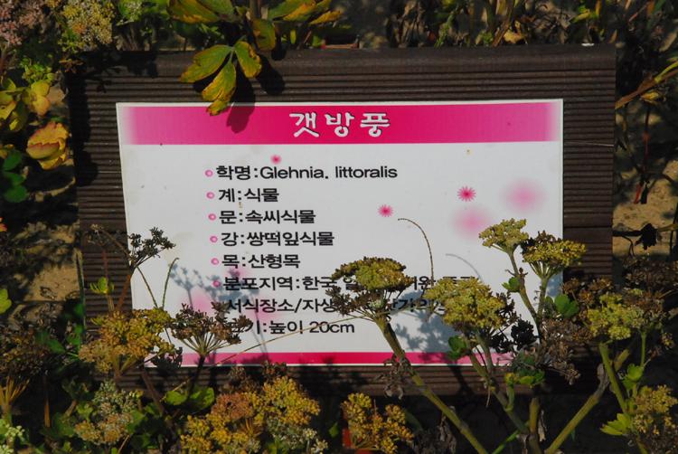 bangpung20140922-태안04.jpg