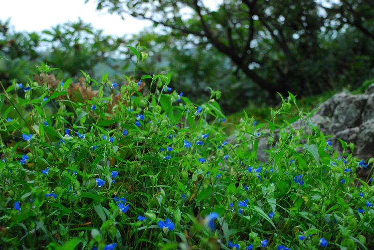 dal20120914eungam_2.jpg
