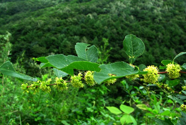goangdaessa20120815dalsan02.jpg