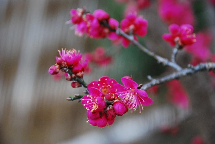 hongmai2010031namsan_2.jpg